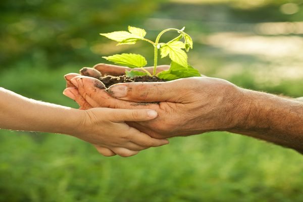 Hands,Of,Elderly,Man,And,Baby,Holding,A,Young,Plant